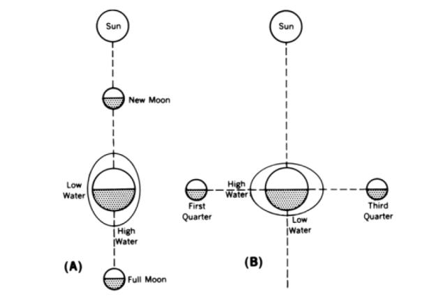 ผลกระทบจากดวงอาทิตย์และดวงจันทร์ต่อการเกิดปรากฏการณ์น้ำขึ้นน้ำลง (